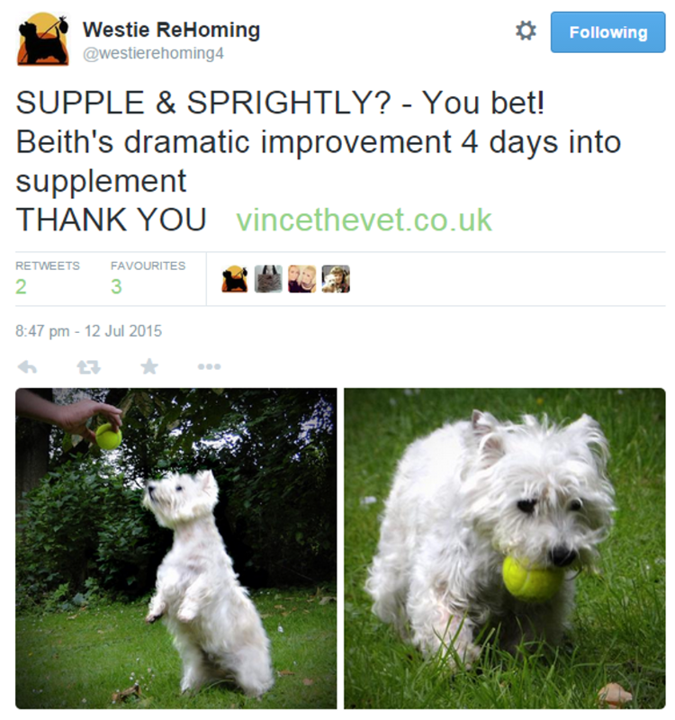 Feedback-Twitter-Supple-Sprightly.png2