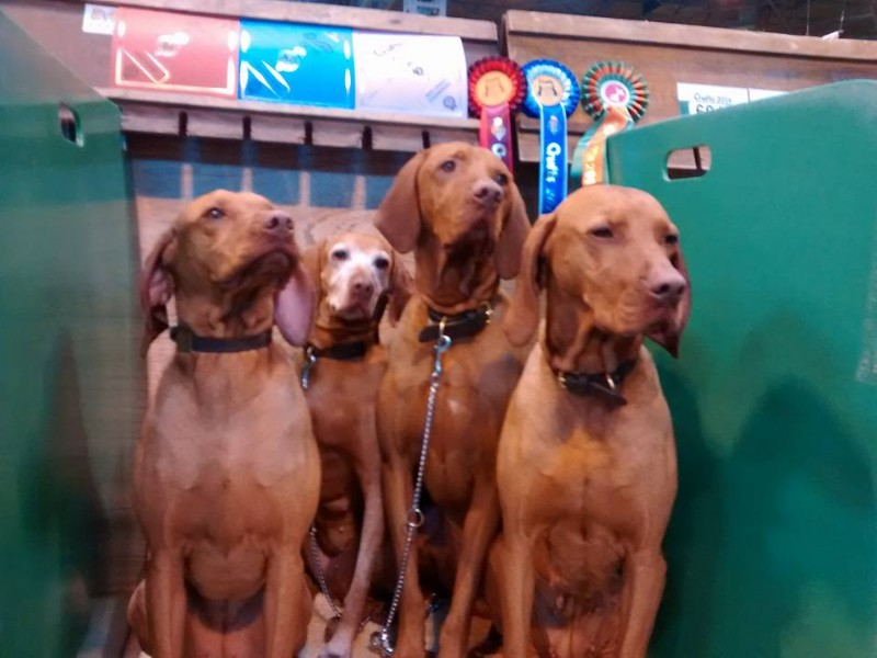 2016-Crufts-Rosie-Tilly-Poppy-Pi