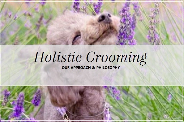 HOLISIT-CGROOMING-640x426